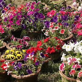 Flowers wallpaper by Kedar Banerjee - Novices Only Flowers & Plants ( beautiful, flowers, wallpapers, autumn, colorful )