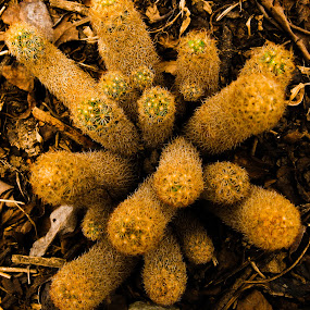 Cactus garden by Hrijul Dey - Nature Up Close Other plants ( contrast, cactus, garden, colorful, darjeeling )