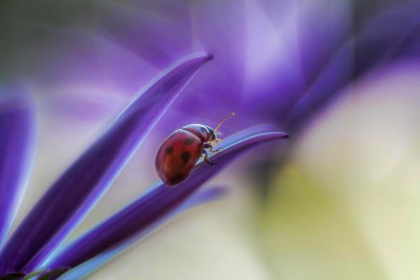 bug di Cinzia_torelli