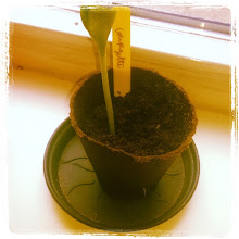 Photo: my first zucchini seed didn't germinated so I had to plant one !09-6-15