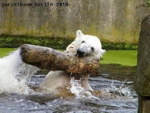 Photo: Bereits frueh im Wasser aktiv :-)