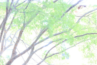 Photo: Trees Requirement 1 (Poor exposure) 2 sec, f/36, ISO 400 This is an overexposed picture of the trees outside of my window.