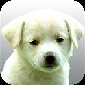 Perros.Todas las razas y fotos icon