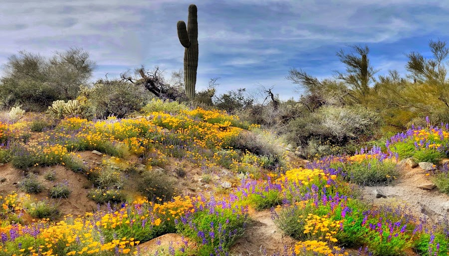 Desert superbloom by Morris Fremar - Instagram & Mobile iPhone