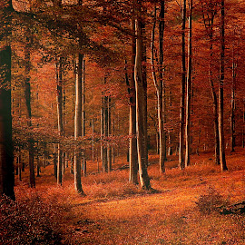 Autumn colors by Janeta Sandutu - Landscapes Forests ( forest, autumn leaves )