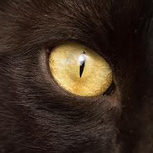 Photo: Getting the evil eye.