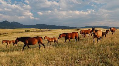 Photo: Copyright Brett Fagan Mt Ellis Horses