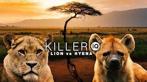 Killer IQ: Lion vs Hyena thumbnail