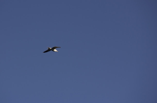 Let's fly away... di Chiara Parisi