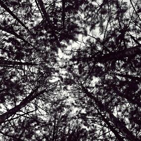 by Milica Đorđević - Landscapes Forests