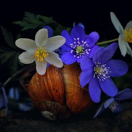 by Alin Achim R - Flowers Flowers in the Wild
