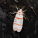 Erebid Moth Female