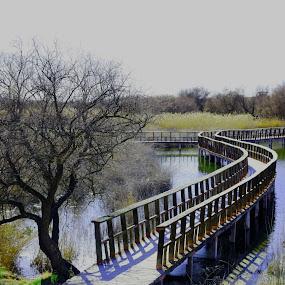 Las Tablas de Damiel, Cuidad Real by Joseph Escopin - Nature Up Close Water ( water, damiel, nature reservoir, tablas de damiel, ciudad real )