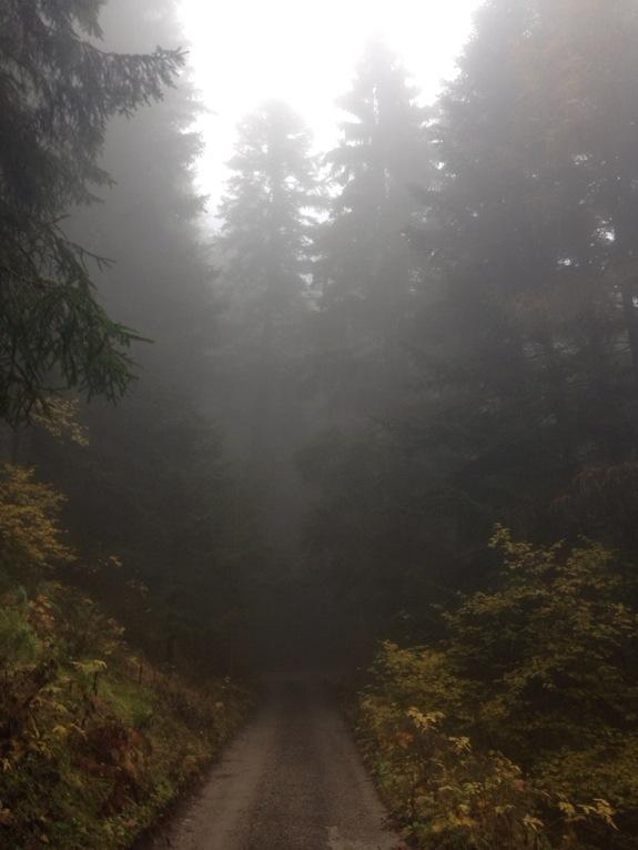 Yeah. fog.