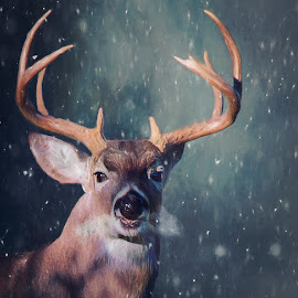 by Kelley Hurwitz Ahr - Digital Art Animals ( estes park, colorado )