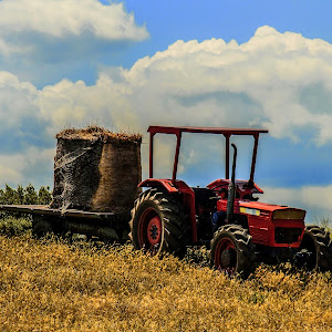 tractor in a field of wheat.jpg