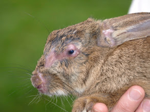 Photo: 28/09/08 (Bunny now weighing in at 840 g :-) )