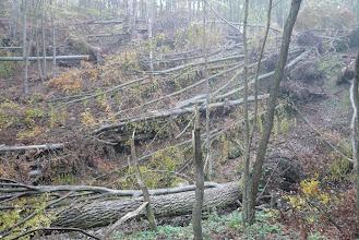 Photo: május óta így néz ki az erdő