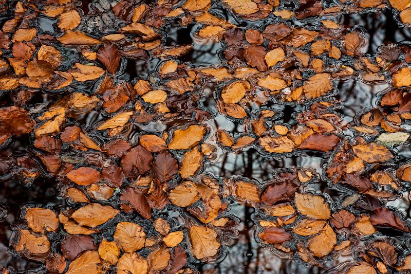 Geometrie di foglie di LucaMonego