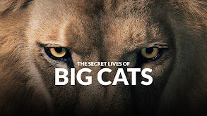The Secret Lives of Big Cats thumbnail