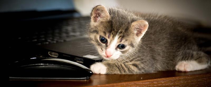 Cesaretto ed il mouse wireless di phrp