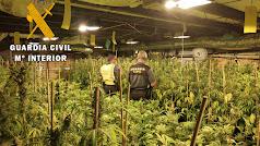 Agentes de la Guardia Civil, en la plantación localizada.