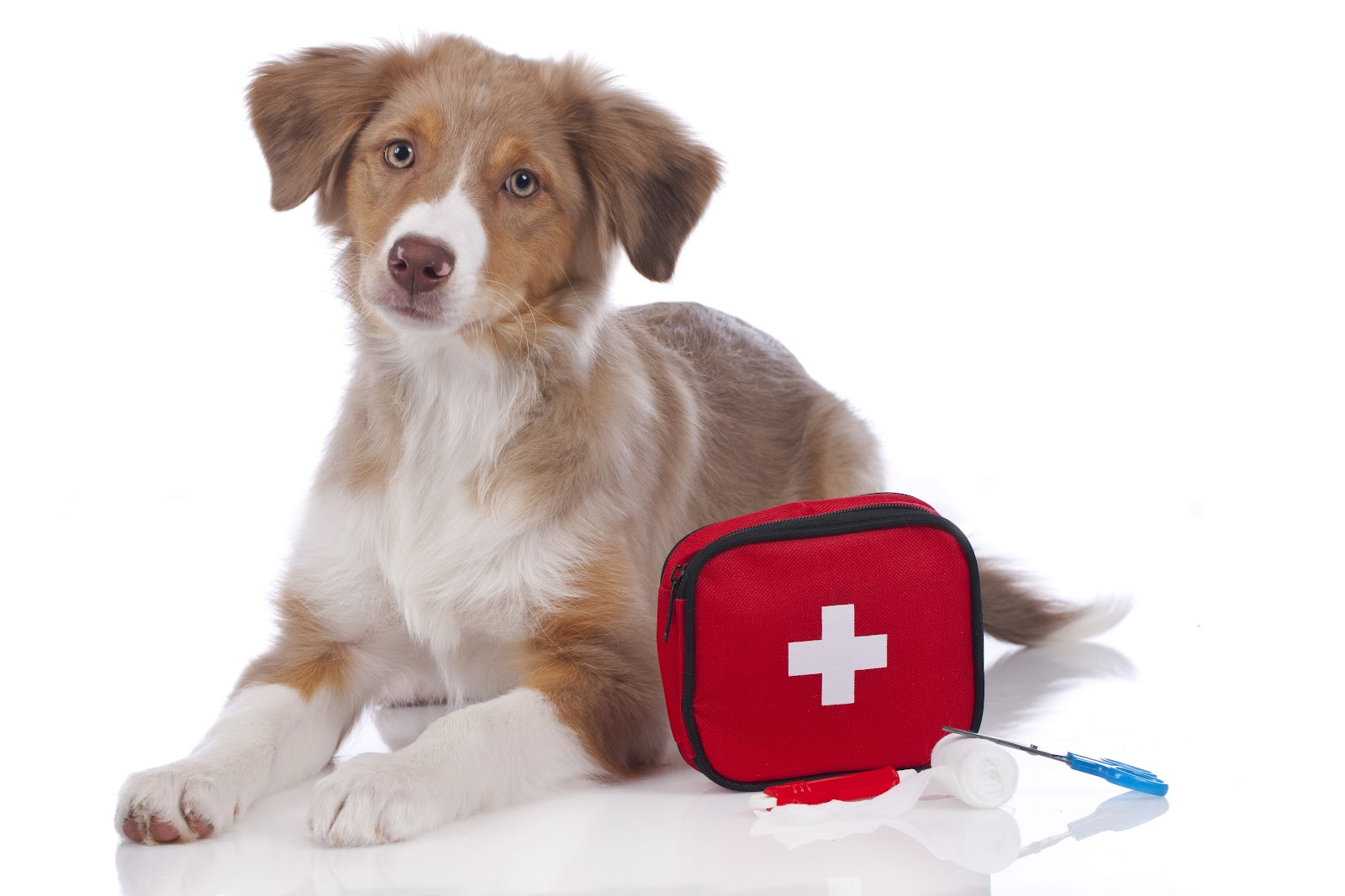 A young Australian Shepard  laying down with a red first aid kit next to the dog.