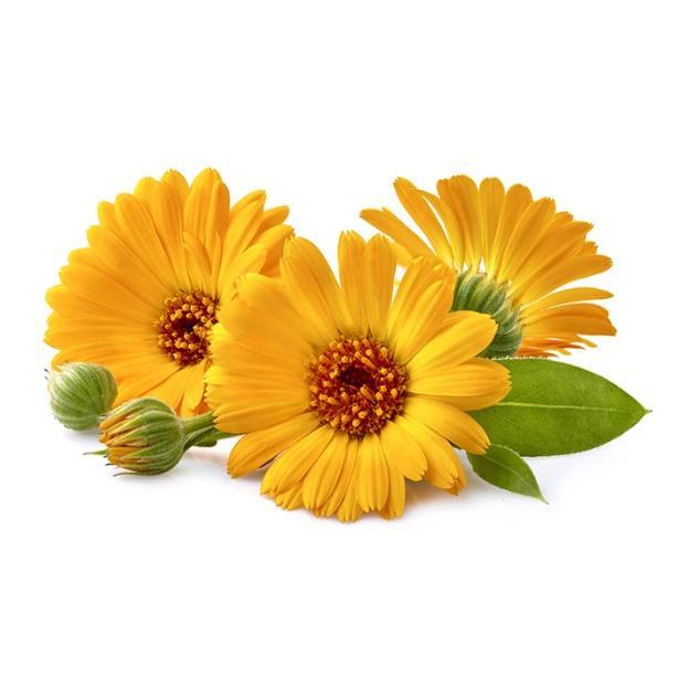 O imagine care conține floare, plantă, floarea soarelui  Descriere generată automat