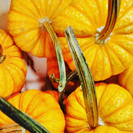 Autumn's Here by Carlo McCoy - Instagram & Mobile Android ( orange, healing, harvest, squash, healthy,  )