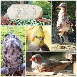 キャンベルタウン 野鳥の森
