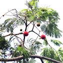 Badminton Ball Tree