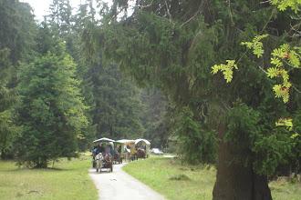 Photo: 5 chars avec 60 personnes / 5 Wagen mit 60 Personen