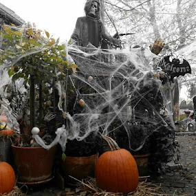Halloween decorations by Joe Harris - Public Holidays Halloween ( halloween fence pumpkin spiderweb web spider skull haunting )
