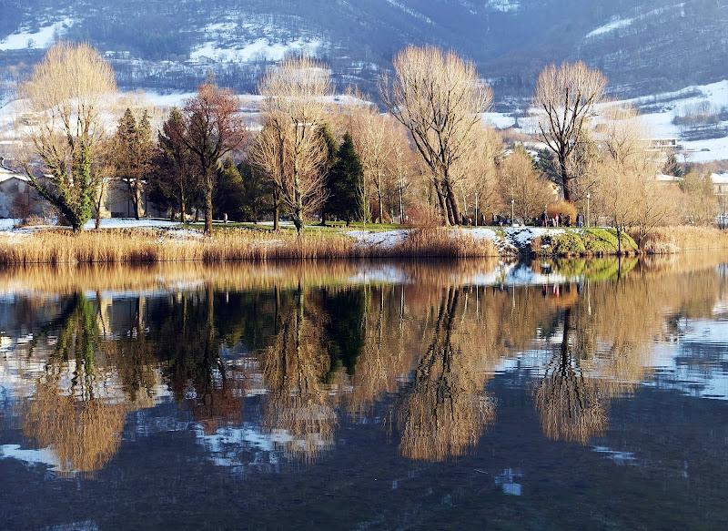 Alberi nel lago di viola94