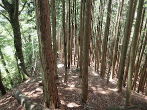 植林帯の道に