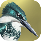 iBird Lite Free Guide to Birds icon