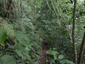 Photo: Tanah Rata, Cameron Highlands - trail 9, overgrown last part of trail