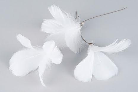 Fjädrar Blom Vit 12-pack