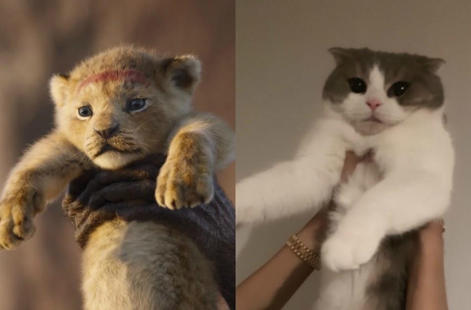 the lion king_leo_simba_blackpink_lisa2