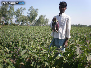 Photo: Farmer in a vegetable field