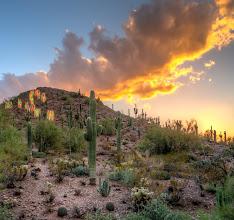 Photo: Sunset in Botanical Garden - Phoenix, AZ