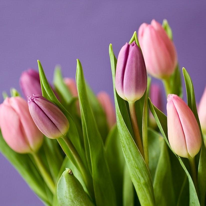 Cómo conservar bouquets de flores naturales
