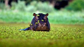 Okavango thumbnail