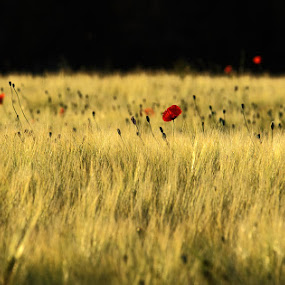 by Mihaila Cristian - Landscapes Prairies, Meadows & Fields