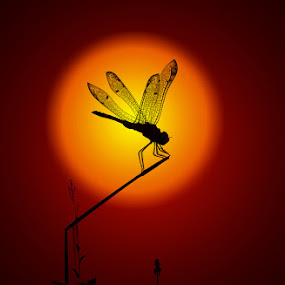 SUN DAY by Maroof Rana - Animals Insects & Spiders