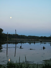 Photo: Moon reflected in a lake at Carriage Hill Metropark in Dayton, Ohio.