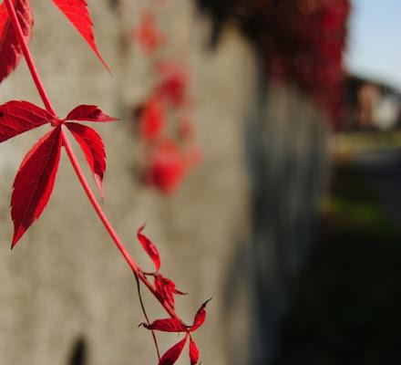 Rosso d'ottobre di andrealbieri