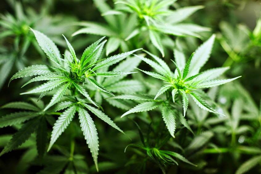 States see little bump in revenue from pot sales