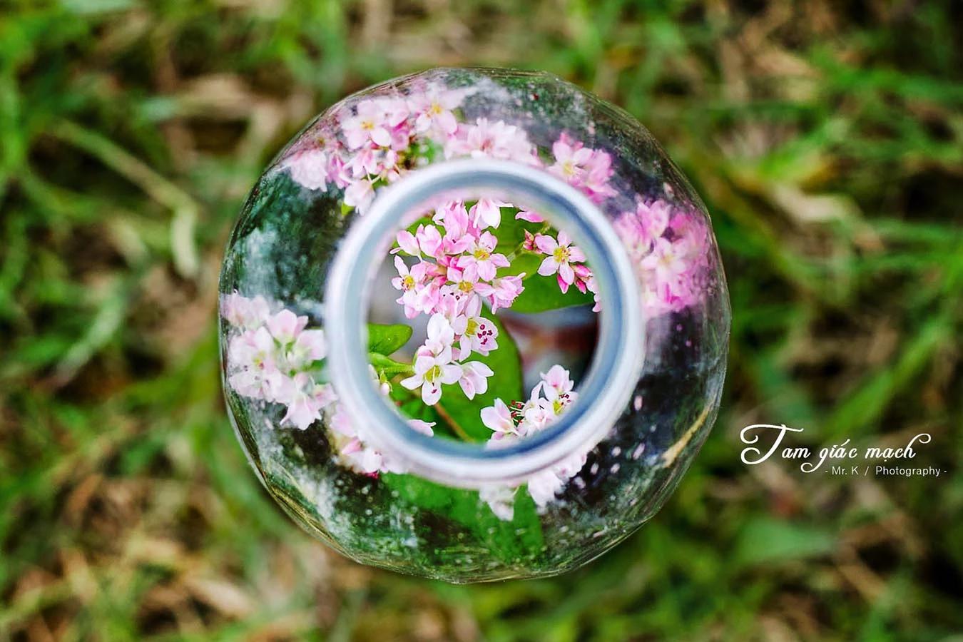Tháng 11 - tam giác mạch nhuộm hồng xứ Hà Giang - ảnh 3