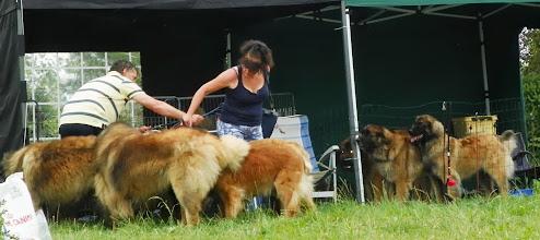 Photo: 11 chiens sous deux tivolis